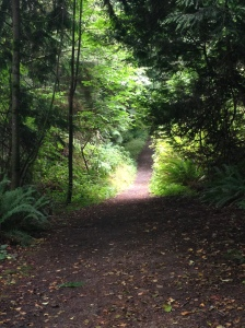 A hiking trail near my new house